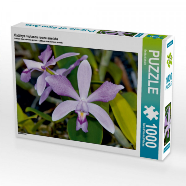 Puzzle Cattleya violacea rosea anelata
