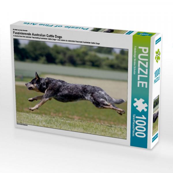 Puzzle Faszinierende Australian Cattle Dogs