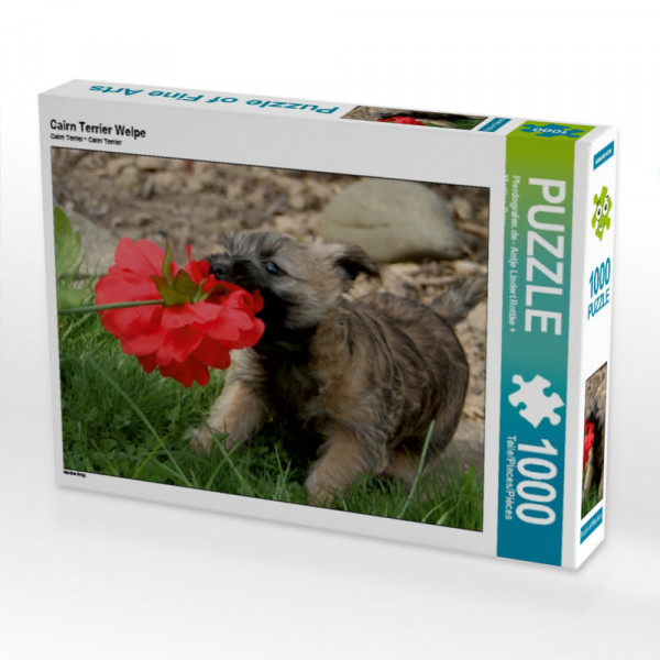 Puzzle Cairn Terrier Welpe