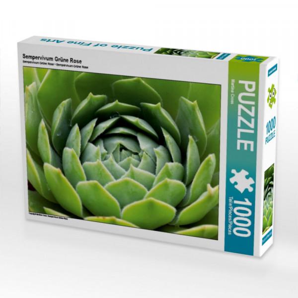 Puzzle Sempervivum Grüne Rose