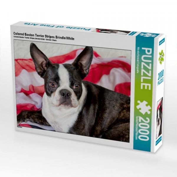 Puzzle Colored Boston Terrier Stripes Brindle/White 2000 Teile Puzzle quer Motiv 1 Bild 1