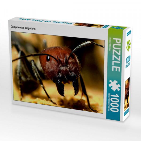 Puzzle Camponotus singularis