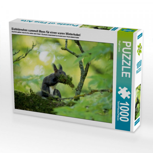 Puzzle Eichhörnchen sammelt Moos für einen waren Winterkobel