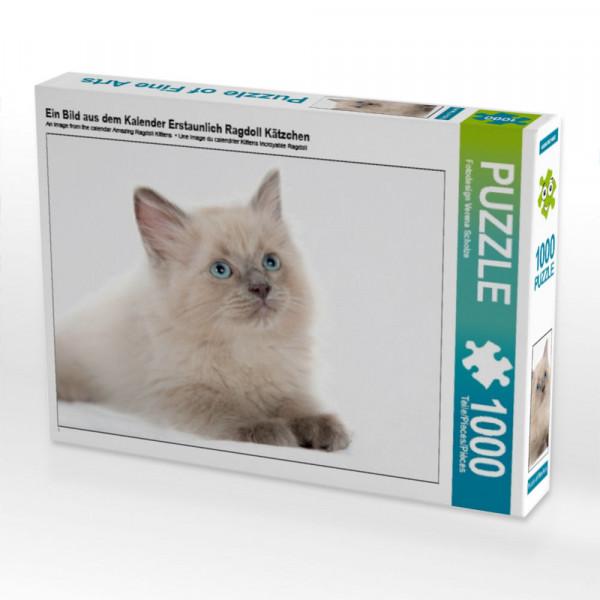 Puzzle Ein Bild aus dem Kalender Erstaunlich Ragdoll Kätzchen