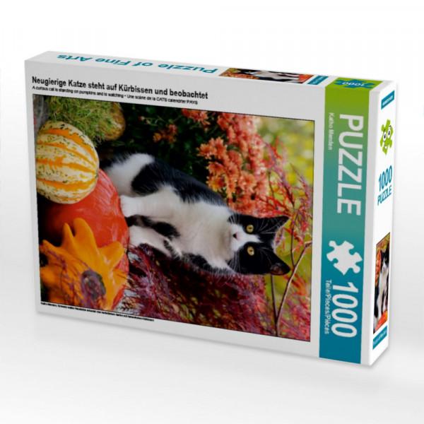 Puzzle Neugierige Katze steht auf Kürbissen und beobachtet