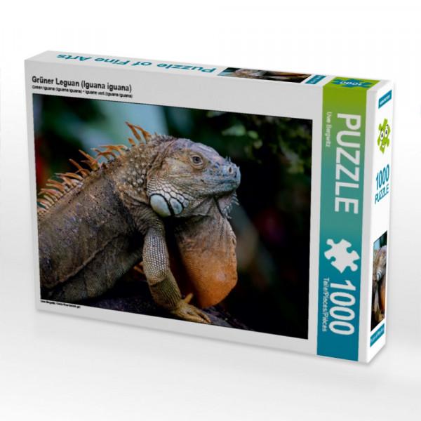 Puzzle Grüner Leguan Iguana iguana