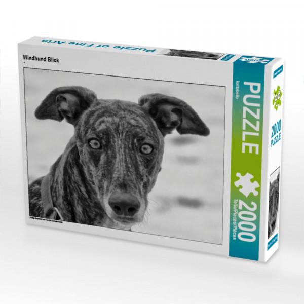 Puzzle Windhund Blick Foto-Puzzle Bild von