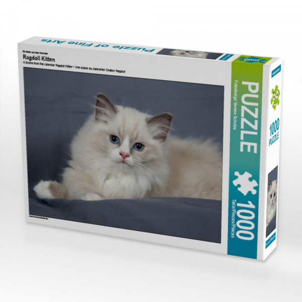 Puzzle Ragdoll Kitten