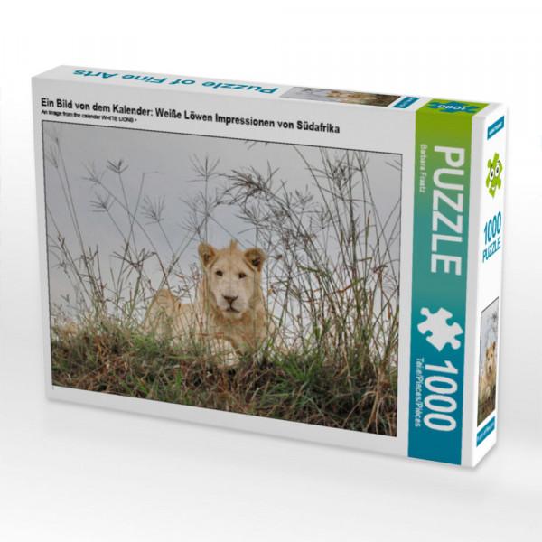 Puzzle Ein Bild von dem Kalender: Weiße Löwen Impressionen von Südafrika