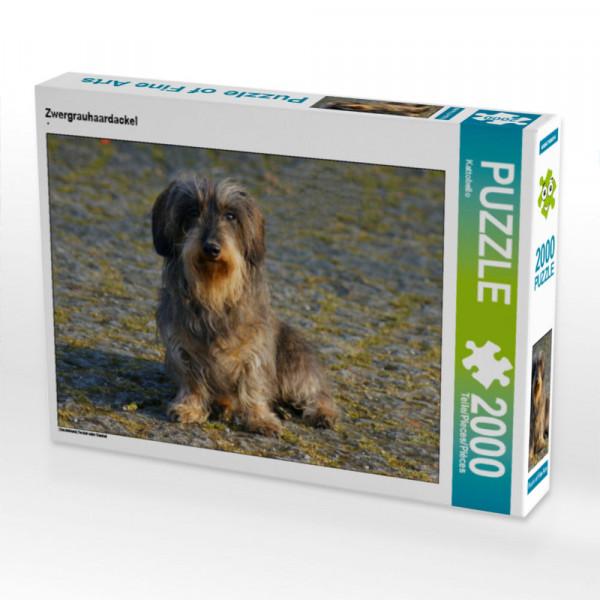 Puzzle Zwergrauhaardackel Foto-Puzzle Bild von