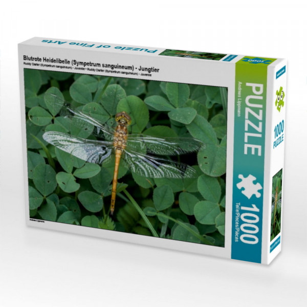 Puzzle Blutrote Heidelibelle Sympetrum sanguineum - Jungtier