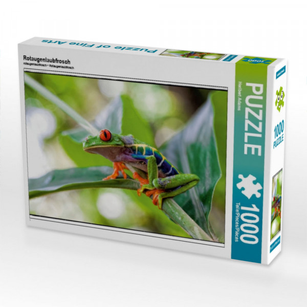 Puzzle Rotaugenlaubfrosch
