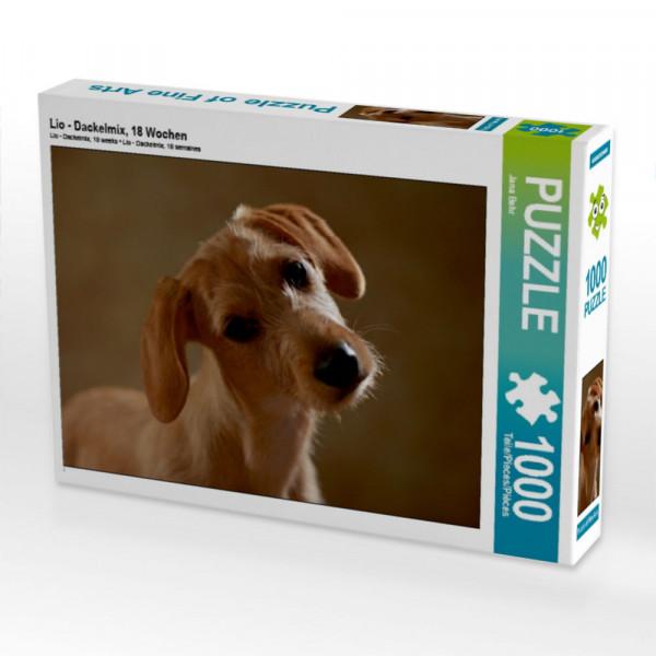 Puzzle Lio - Dackelmix 18 Wochen