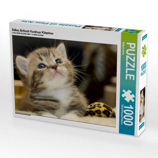 Puzzle Süßes Britisch Kurzhaar Kätzchen