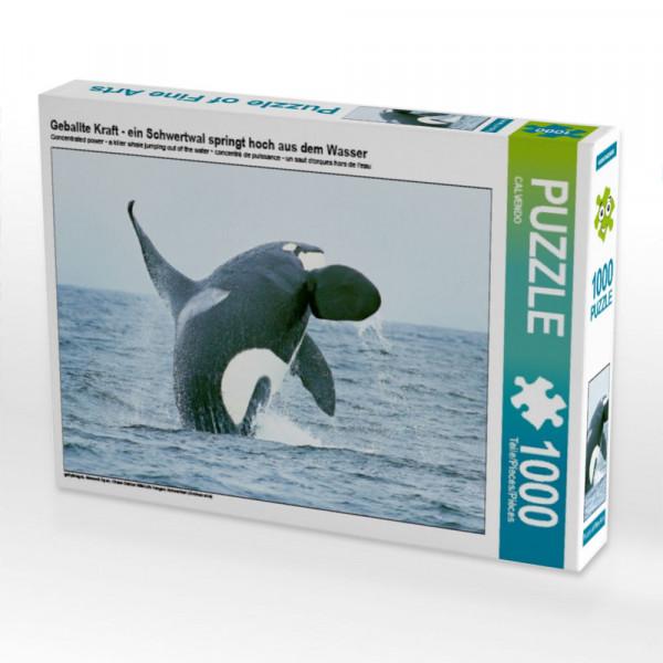 Puzzle Geballte Kraft - ein Schwertwal springt hoch aus dem Wasser