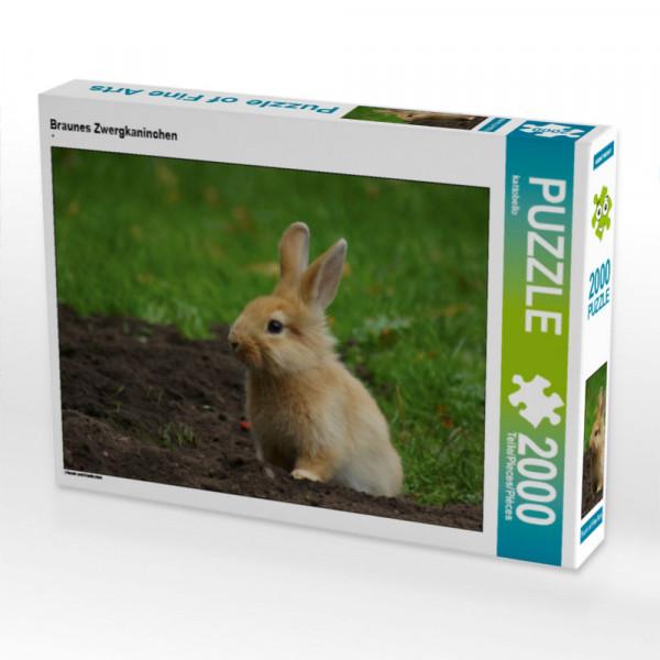 Puzzle Braunes Zwergkaninchen Foto-Puzzle Bild von