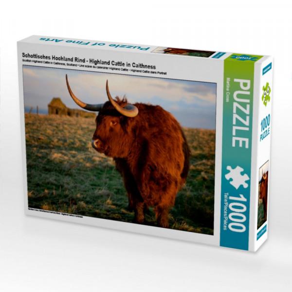 Puzzle Schottisches Hochland Rind - Highland Cattle in Caithness